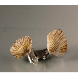 Gilded clamshel clip earrings