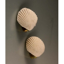 White scallop clip earrings